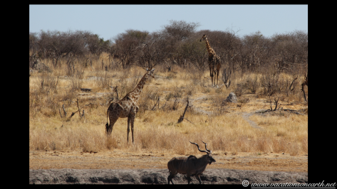 Namibia 2013 - Khaudum National Park 2.049