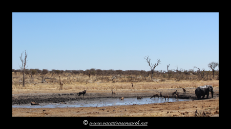 Namibia 2013 - Khaudum National Park 2.050
