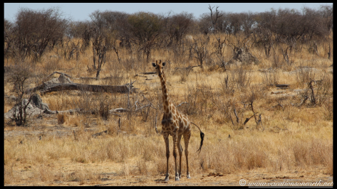 Namibia 2013 - Khaudum National Park 2.052