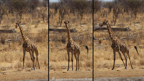 Namibia 2013 - Khaudum National Park 2.053