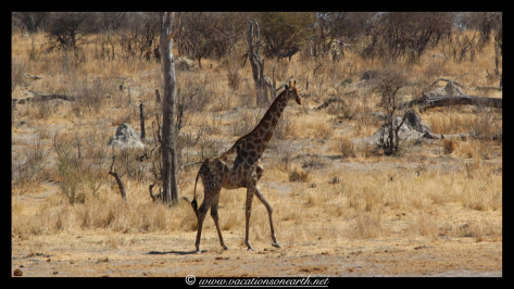 Namibia 2013 - Khaudum National Park 2.054