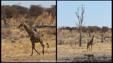 Namibia 2013 - Khaudum National Park 2.055