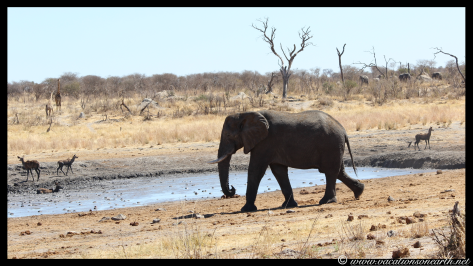 Namibia 2013 - Khaudum National Park 2.058