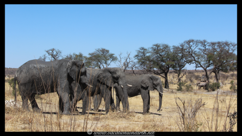 Namibia 2013 - Khaudum National Park 2.060