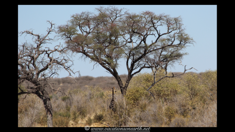 Namibia 2013 - Khaudum National Park 2.061