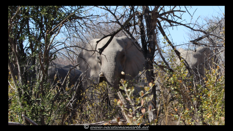 Namibia 2013 - Khaudum National Park 2.064