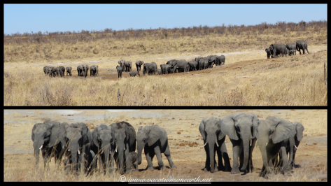 Namibia 2013 - Khaudum National Park 2.065
