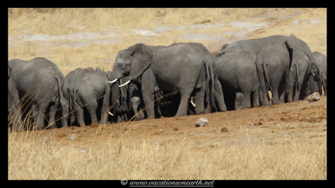 Namibia 2013 - Khaudum National Park 2.066
