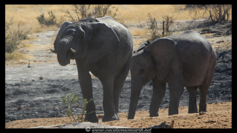 Namibia 2013 - Khaudum National Park 2.067