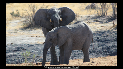 Namibia 2013 - Khaudum National Park 2.068