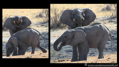 Namibia 2013 - Khaudum National Park 2.069