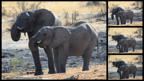 Namibia 2013 - Khaudum National Park 2.070