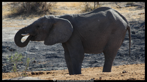 Namibia 2013 - Khaudum National Park 2.071