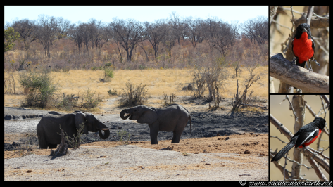 Namibia 2013 - Khaudum National Park 2.072
