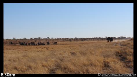 Namibia 2013 - Khaudum National Park to Ngepi.002