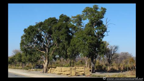 Namibia 2013 - Khaudum National Park to Ngepi.043