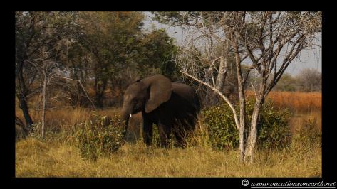 Namibia 2013 - Mamili:Nkasa Lupala National Park .010