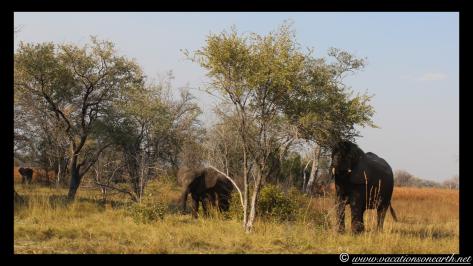 Namibia 2013 - Mamili:Nkasa Lupala National Park .011