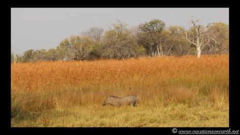 Namibia 2013 - Mamili:Nkasa Lupala National Park .012