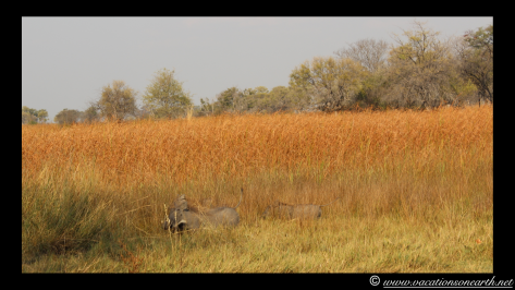 Namibia 2013 - Mamili:Nkasa Lupala National Park .013