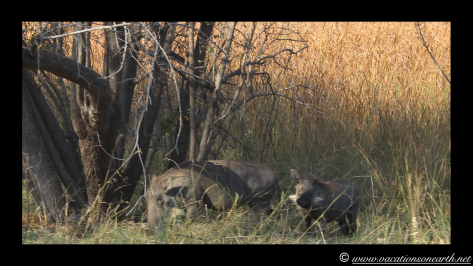 Namibia 2013 - Mamili:Nkasa Lupala National Park .014