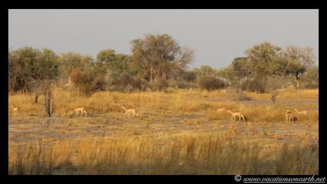Namibia 2013 - Mamili:Nkasa Lupala National Park .028