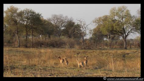 Namibia 2013 - Mamili:Nkasa Lupala National Park .029