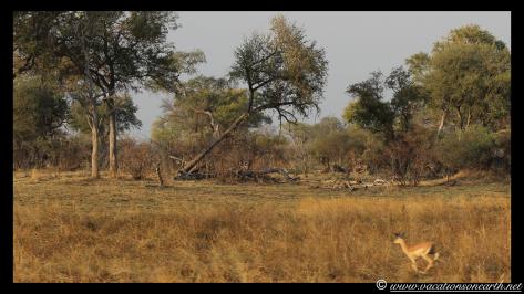 Namibia 2013 - Mamili:Nkasa Lupala National Park .030