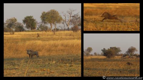 Namibia 2013 - Mamili:Nkasa Lupala National Park .034