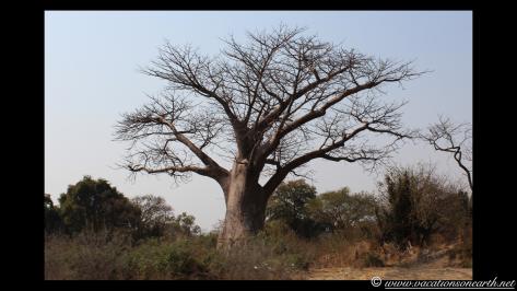 Namibia 2013 - Island View Lodge road to B8 Ngoma road, 13 Aug.002