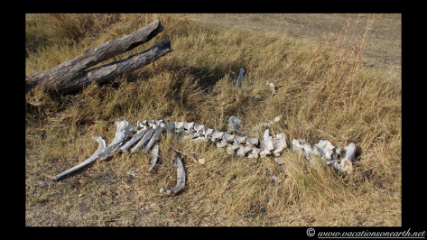 Namibia 2013 - Mamili (Nkasa Lupala) National Park.021