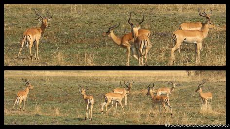 Namibia 2013 - Mamili (Nkasa Lupala) National Park.034