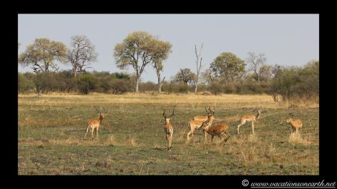 Namibia 2013 - Mamili (Nkasa Lupala) National Park.036