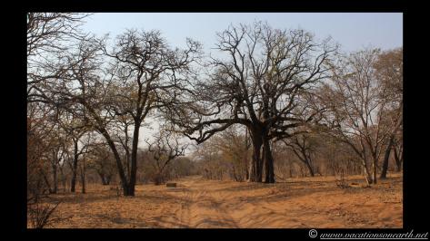 Namibia 2013 - Chobe National Park 1.001