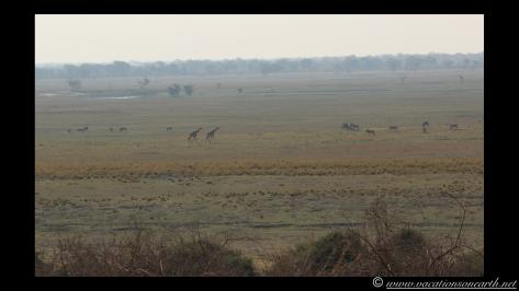 Namibia 2013 - Chobe National Park 1.005