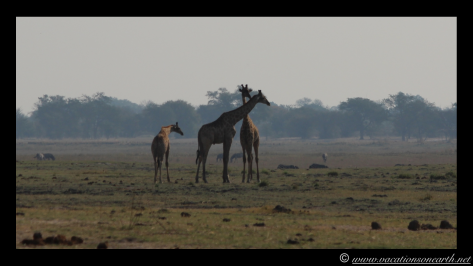 Namibia 2013 - Chobe National Park 1.007
