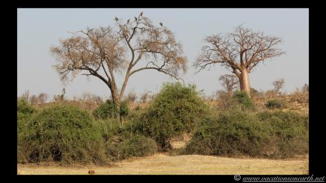 Namibia 2013 - Chobe National Park 1.009