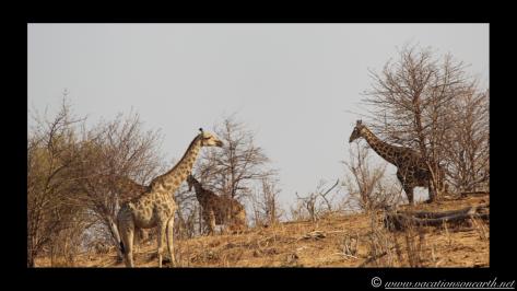 Namibia 2013 - Chobe National Park 1.025