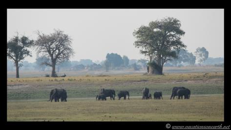 Namibia 2013 - Chobe National Park 2.011