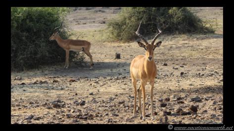 Namibia 2013 - Chobe National Park 2.020
