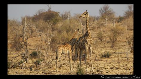 Namibia 2013 - Chobe National Park 2.022