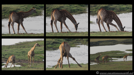 Namibia 2013 - Chobe National Park 2.029
