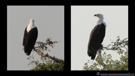 Namibia 2013 - Chobe National Park 2.032