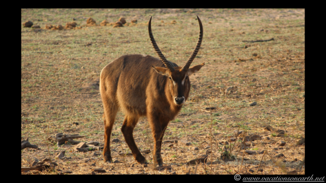 Namibia 2013 - Chobe National Park 2.047