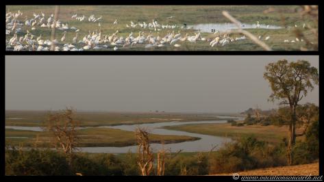 Namibia 2013 - Chobe National Park 3.006