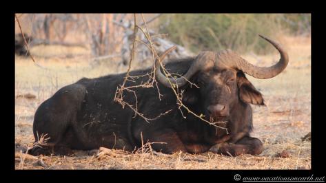 Namibia 2013 - Chobe National Park 3.015