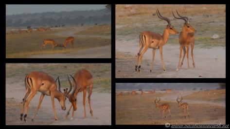 Namibia 2013 - Chobe National Park 3.025