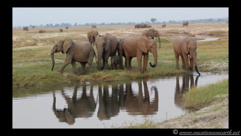 Namibia 2013 - Chobe National Park 3.031