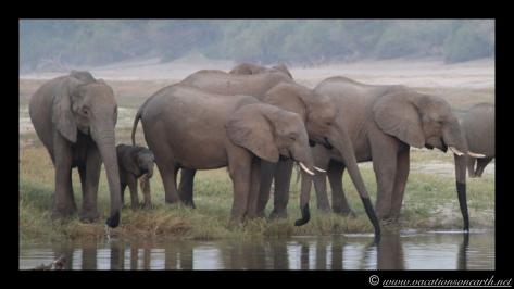 Namibia 2013 - Chobe National Park 3.035