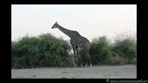 Namibia 2013 - Chobe National Park 3.041